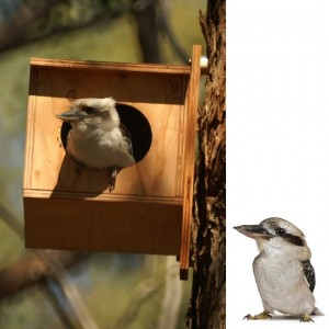 Kookaburra Nesting Box Kit