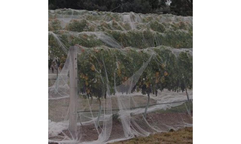 Bird Netting - Fruit Tree - WHITE
