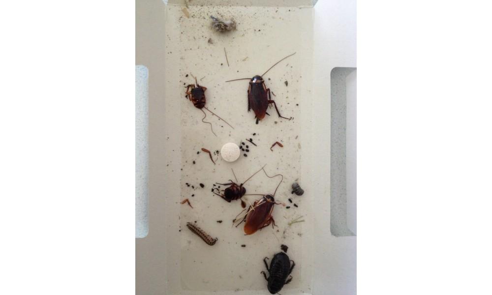 Cockroach Traps - Lo Line