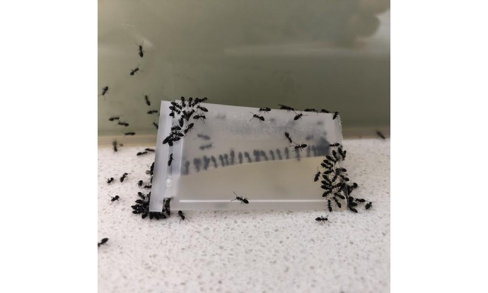 Antmaster Liquid Ant Bait for control of sugar feeding ants