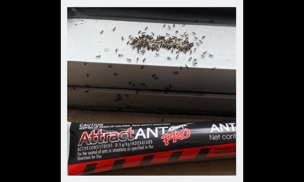 AttractANT PRO Ant Bait Gel Feeding
