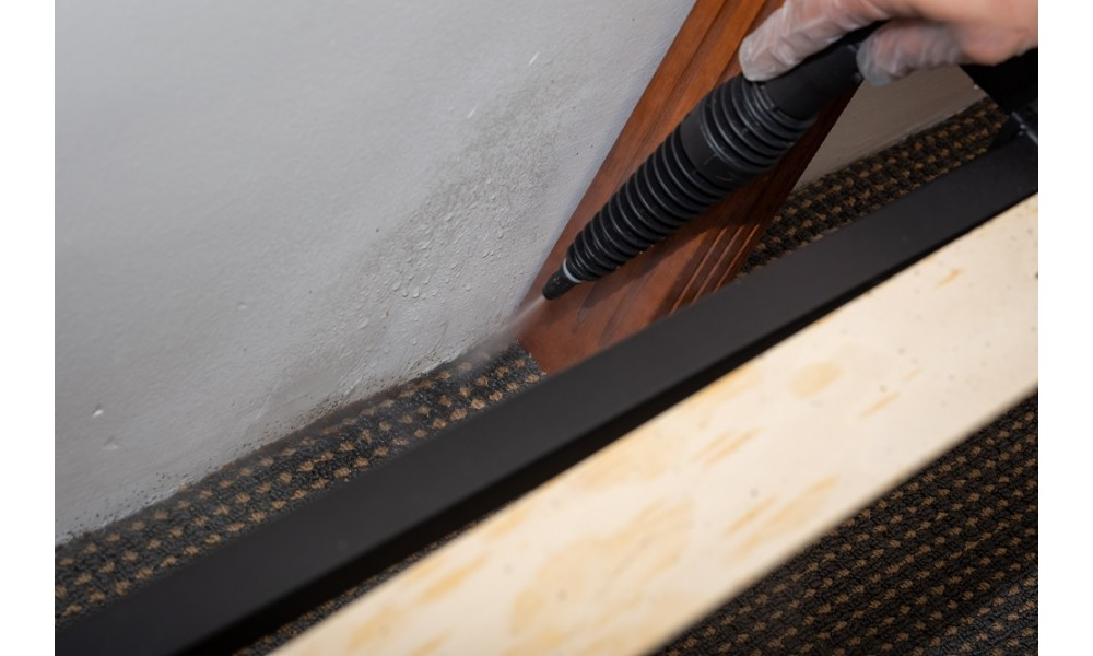 Bed Bug Steamer treating carpet edges