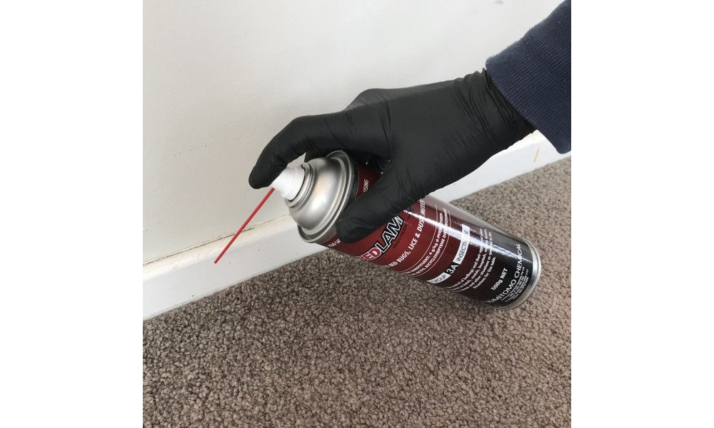 Bedlam Spraying Carpet Edges