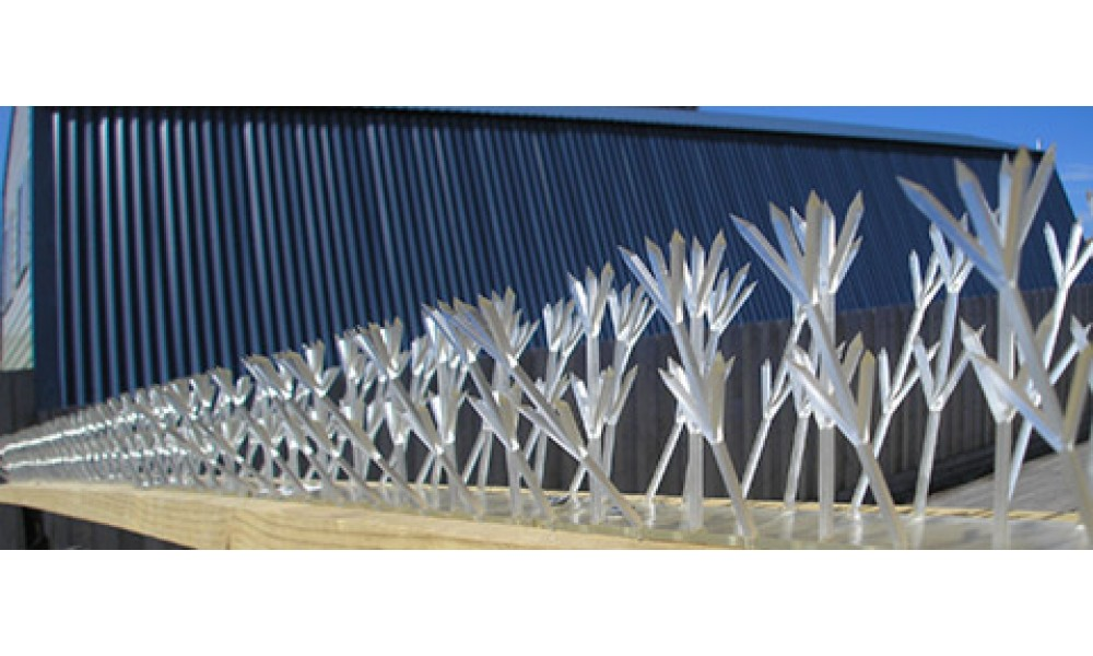 Thorny Devil Bird Spikes