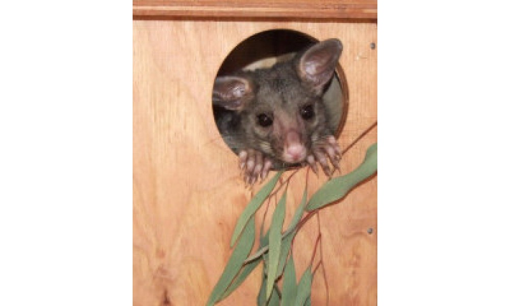Possum Nesting Box Kit Brushtail Wooden Buy Online