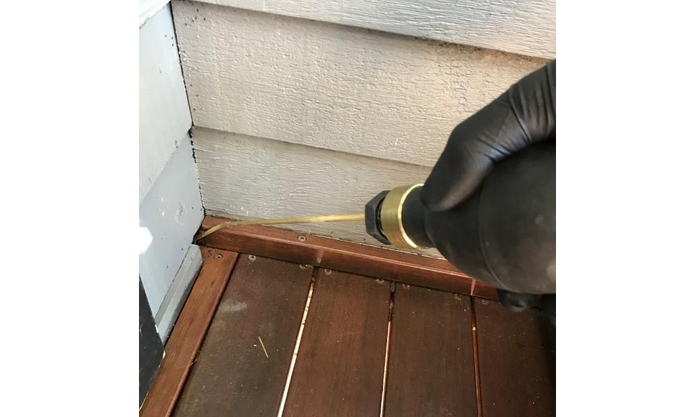 Starrdust Pro treating ants
