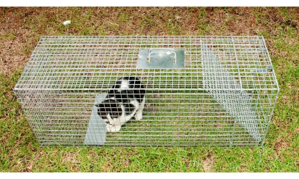 Feral Cat Trap Trapping Humane Buy Online