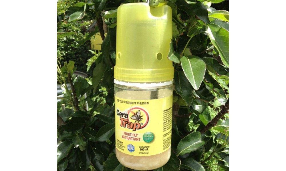 Cera Trap - Organic Fruit Fly Trap in tree