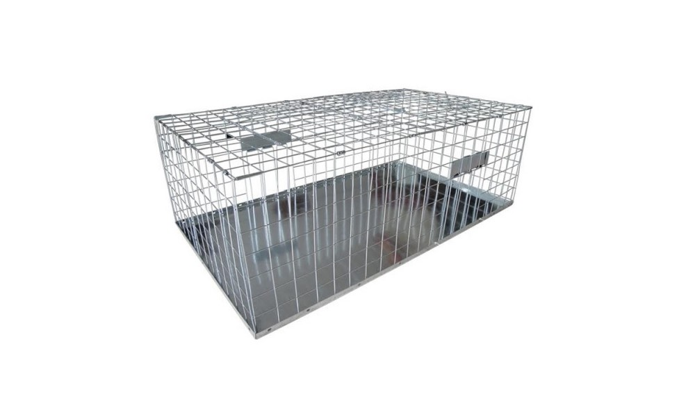 Foldable Pigeon Trap