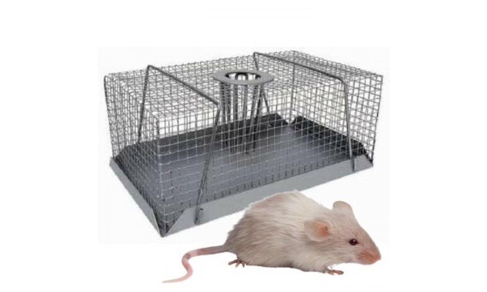 Multi Catch Mouse Trap Small