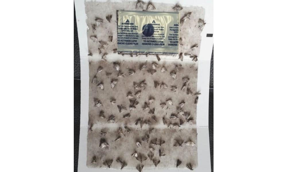 Envirosafe Pantry Moth Trap - Professional