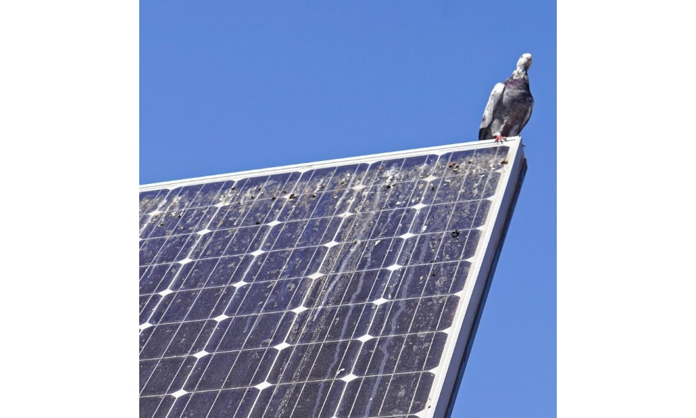 Pigeon poo on solar panel