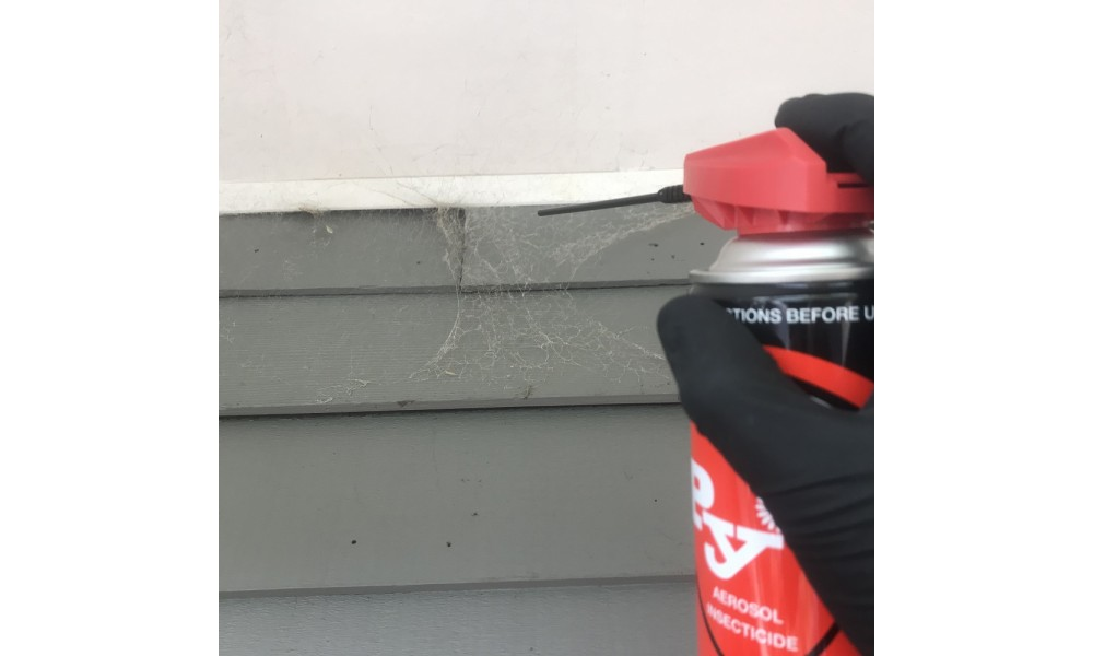 PY Spray Spraying Spiders Web