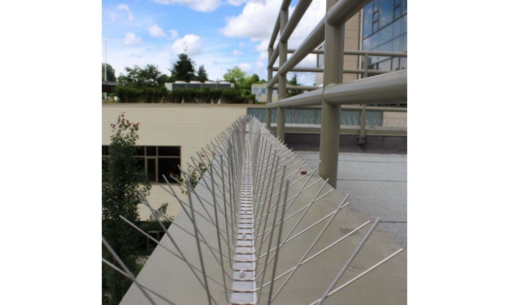 Stainless Steel Bird Spikes - Extra Wide Installed
