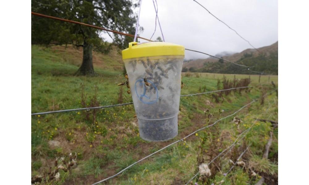 VesPEX PRO European Wasp Lure