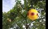 Scare Eye Balloon