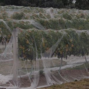 Bird Netting - Fruit Tree - WHITE