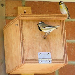 Pardalote Nesting Box