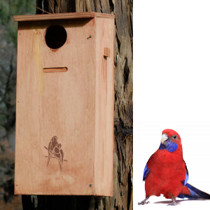 Parrot Nesting Box Kit - Medium