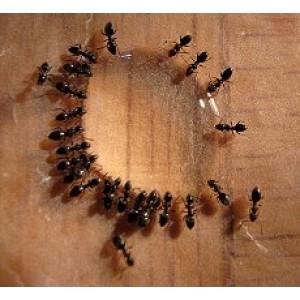 Maxforce Quantum Liquid Ant Bait