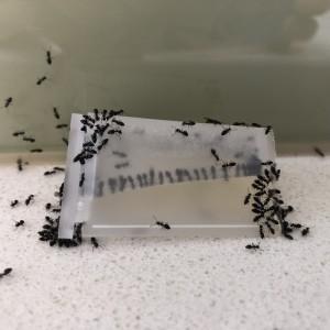 Antmaster Ant Killer