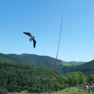 ScaryBird Kite In Use
