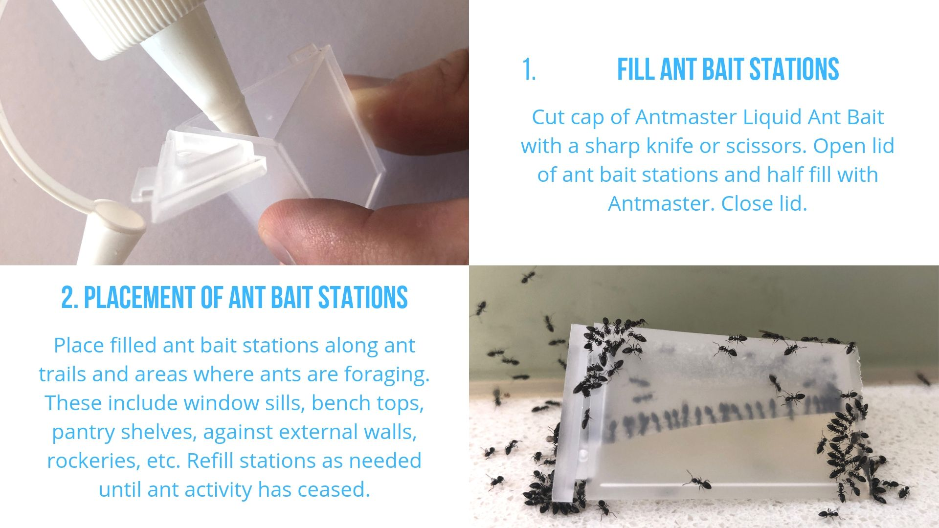 Black Ant Control Kit Instructions