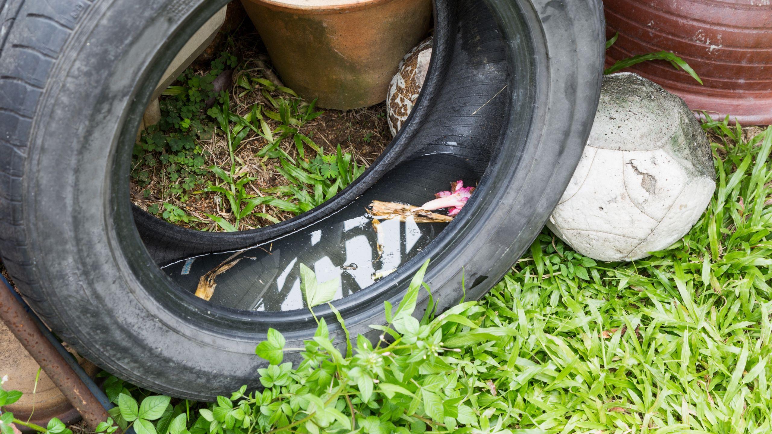 Mosquito Breeding Site Car Tyre