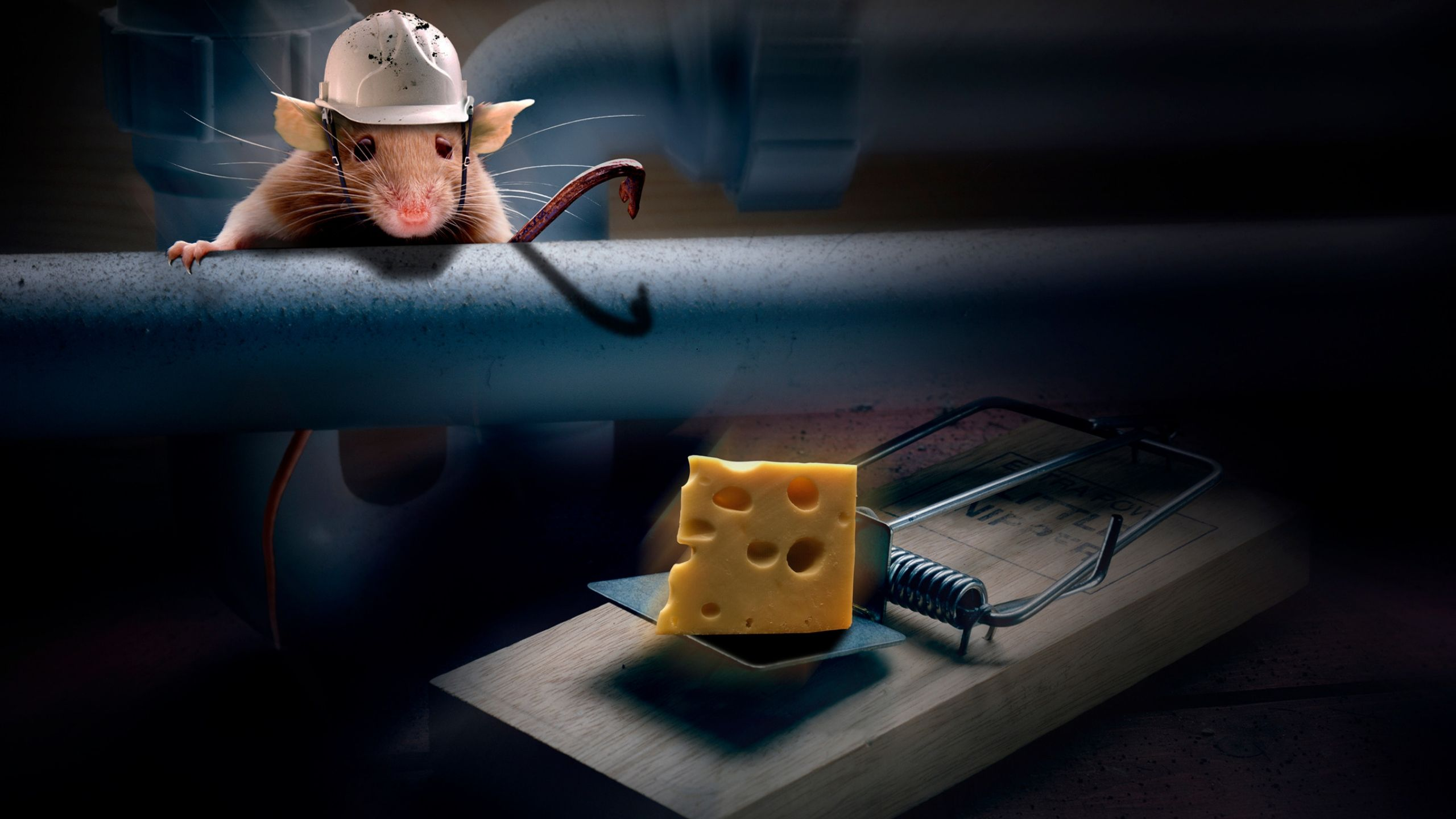 Non-Chemical Rat & Mouse Control