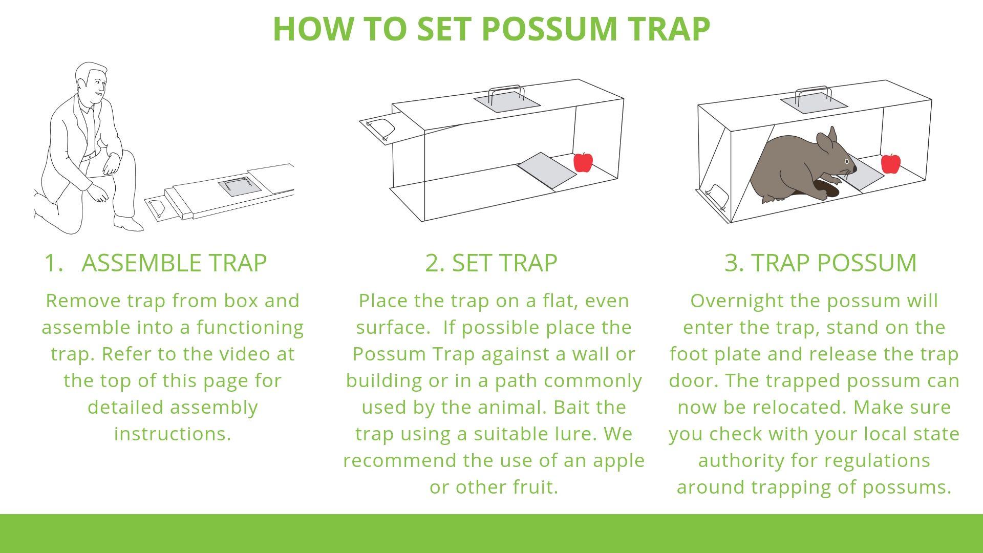 How to trap a possum