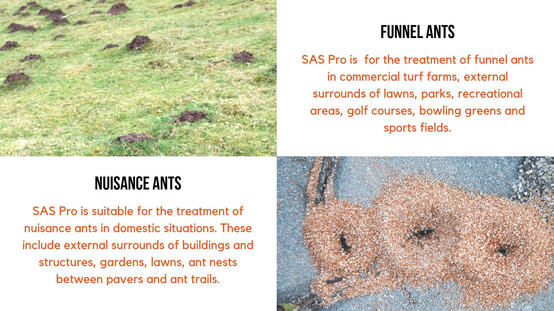 SAS Pro features