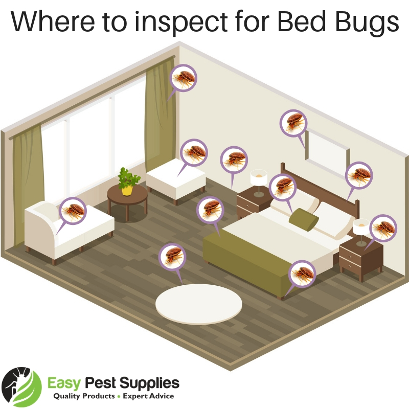 Bed Bug Inspection Points