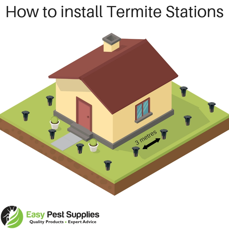 Where to install termite bait stations