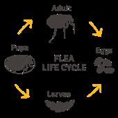 Kills fleas & larvae